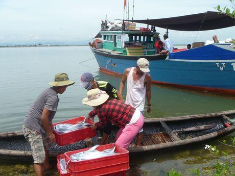 Tuyen chon 1.300 ngu dan di Han Quoc - Anh 1