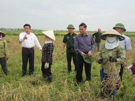 Bao so 7: Sap do bo vao Quang Ninh- Hai Phong - Anh 2