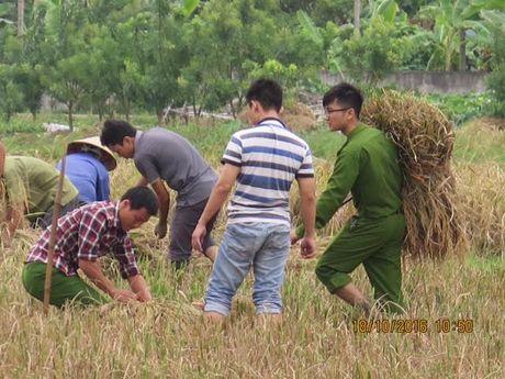 Bao so 7: De nghi cho cong nhan nghi viec de ve que thu hoach lua - Anh 1