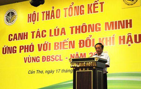 Canh tac lua thong minh thich ung bien doi khi hau: Bo han thoi quen canh tac lac hau - Anh 2