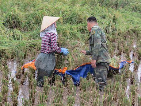 Hai Phong: Hang nghin chien si giup dan thu hoach lua mua chay bao - Anh 8