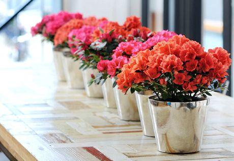 Goi y hoa tang nguoi yeu nhan ngay 20/10 - Anh 3