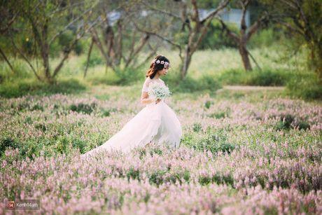 Cafe Sang voi VTV3: Ngat ngay voi thao nguyen hoa ngay giua long Ha Noi - Anh 1