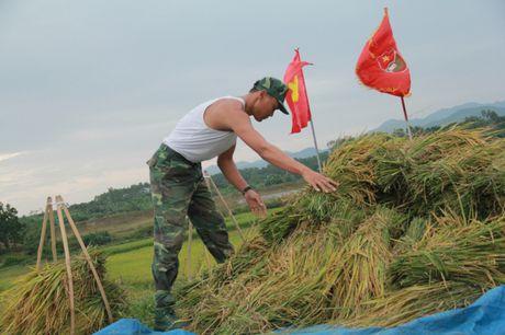 Hinh anh dep cua chu Bo doi giup dan gat lua truoc bao o Quang Ninh - Anh 1