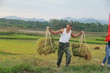 Hinh anh dep cua chu Bo doi giup dan gat lua truoc bao o Quang Ninh - Anh 3