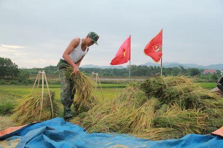 Hinh anh dep cua chu Bo doi giup dan gat lua truoc bao o Quang Ninh - Anh 5