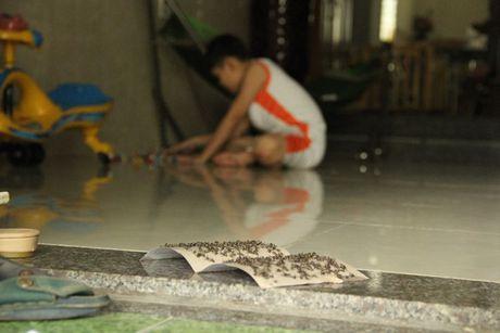 Ruoi 'tan cong', nguoi dan Da Nang khon don - Anh 1