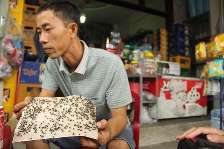 Ruoi 'tan cong', nguoi dan Da Nang khon don - Anh 4