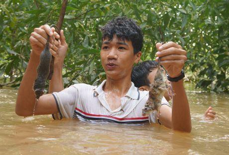 Ngup lan trong nuoc lu san mon chuot dac san - Anh 6