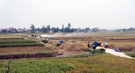 Chu tich Hai Phong xuong ruong gat lua - Anh 5