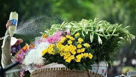 Chum anh dep nuc long nhung ganh hang hoa chi Ha Noi moi co - Anh 9