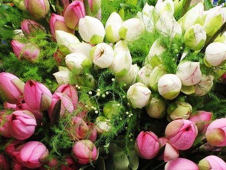 Ngay 20/10: Goi y cach chon va tang hoa y nghia nhat - Anh 2