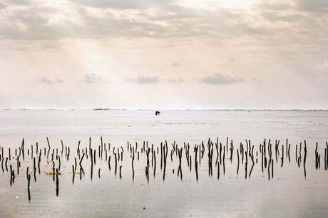 Nhung nguoi san bach tuoc o Zanzibar - Anh 10