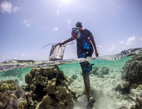 Nhung nguoi san bach tuoc o Zanzibar - Anh 1