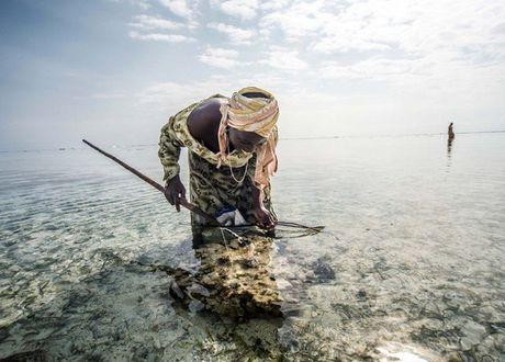 Nhung nguoi san bach tuoc o Zanzibar - Anh 3