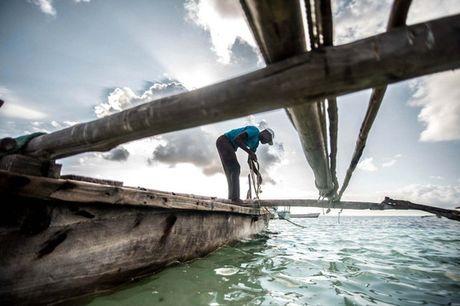 Nhung nguoi san bach tuoc o Zanzibar - Anh 5