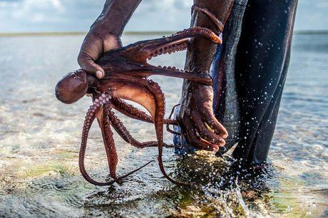 Nhung nguoi san bach tuoc o Zanzibar - Anh 6