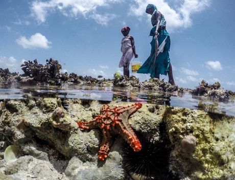 Nhung nguoi san bach tuoc o Zanzibar - Anh 7