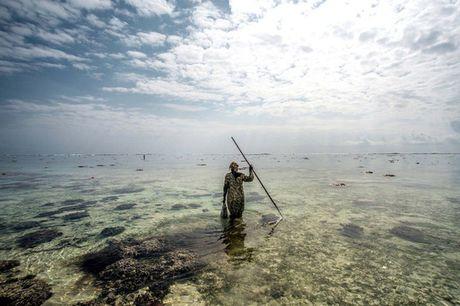 Nhung nguoi san bach tuoc o Zanzibar - Anh 9