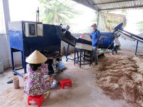 Vinh Long: Nang cao chat luong nam duoc lieu - Anh 1