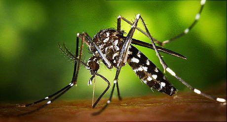Viet Nam phat hien 9 ca nhiem virus Zika - Anh 1