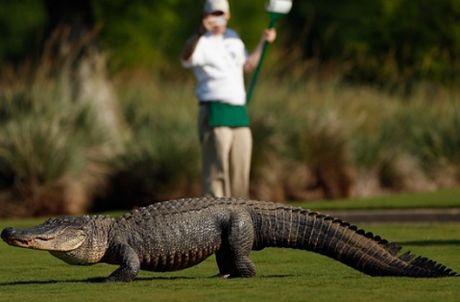 Tran dai 2 met 'DAI NAO' giai golf PGA Tour o Malaysia - Anh 2