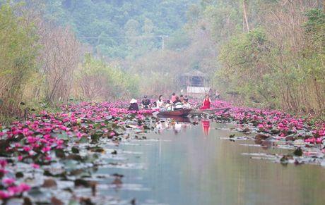 Suoi Yen chua Huong ruc ro sac hoa sung - Anh 1