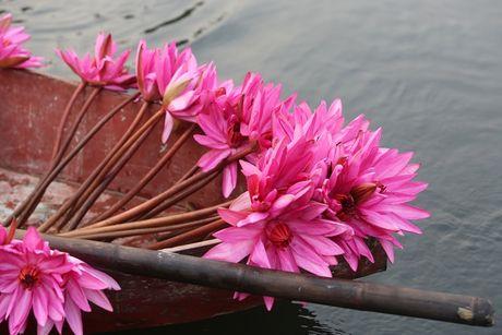 Suoi Yen chua Huong ruc ro sac hoa sung - Anh 5