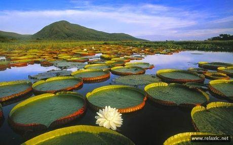 Ky thu khu tu nhien hoang da Pantanal - Brazil - Anh 11
