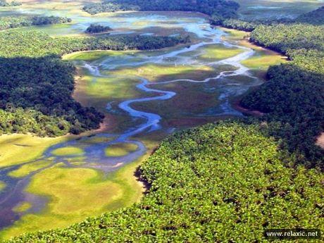 Ky thu khu tu nhien hoang da Pantanal - Brazil - Anh 13