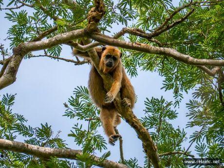 Ky thu khu tu nhien hoang da Pantanal - Brazil - Anh 14