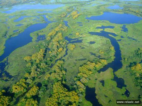 Ky thu khu tu nhien hoang da Pantanal - Brazil - Anh 15