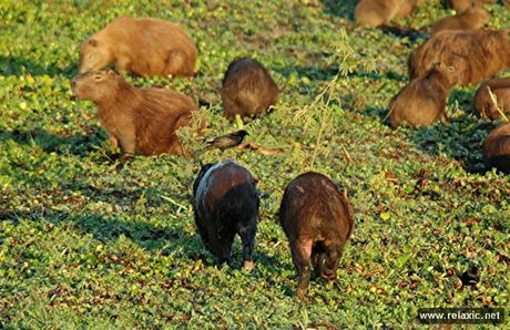 Ky thu khu tu nhien hoang da Pantanal - Brazil - Anh 16