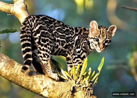 Ky thu khu tu nhien hoang da Pantanal - Brazil - Anh 19