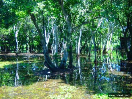 Ky thu khu tu nhien hoang da Pantanal - Brazil - Anh 20