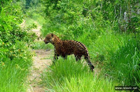 Ky thu khu tu nhien hoang da Pantanal - Brazil - Anh 23