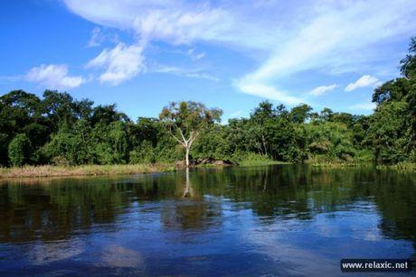 Ky thu khu tu nhien hoang da Pantanal - Brazil - Anh 24