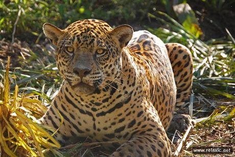 Ky thu khu tu nhien hoang da Pantanal - Brazil - Anh 26