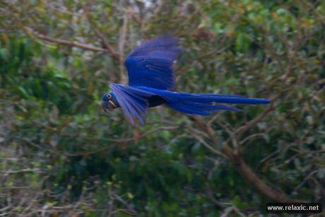 Ky thu khu tu nhien hoang da Pantanal - Brazil - Anh 27