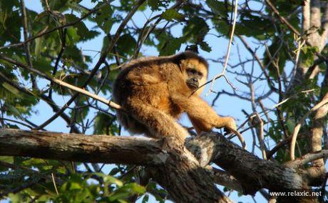Ky thu khu tu nhien hoang da Pantanal - Brazil - Anh 28