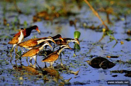 Ky thu khu tu nhien hoang da Pantanal - Brazil - Anh 31
