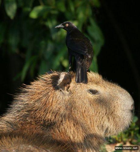 Ky thu khu tu nhien hoang da Pantanal - Brazil - Anh 32