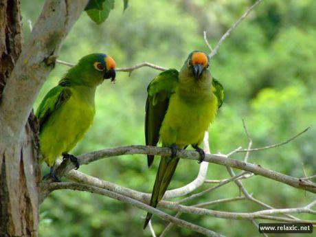 Ky thu khu tu nhien hoang da Pantanal - Brazil - Anh 33