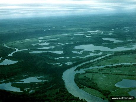 Ky thu khu tu nhien hoang da Pantanal - Brazil - Anh 35