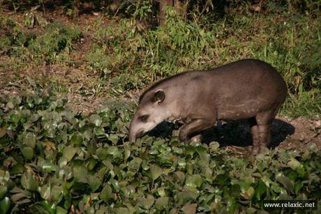 Ky thu khu tu nhien hoang da Pantanal - Brazil - Anh 37