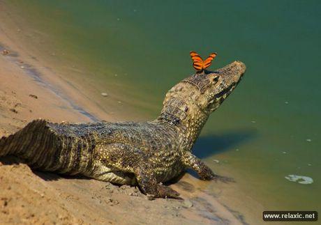Ky thu khu tu nhien hoang da Pantanal - Brazil - Anh 39