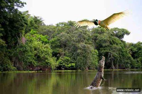 Ky thu khu tu nhien hoang da Pantanal - Brazil - Anh 3