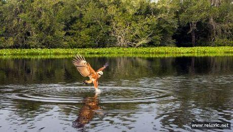 Ky thu khu tu nhien hoang da Pantanal - Brazil - Anh 40