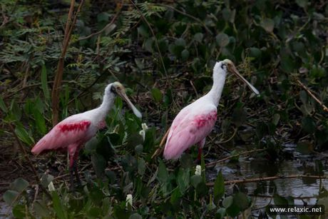Ky thu khu tu nhien hoang da Pantanal - Brazil - Anh 4