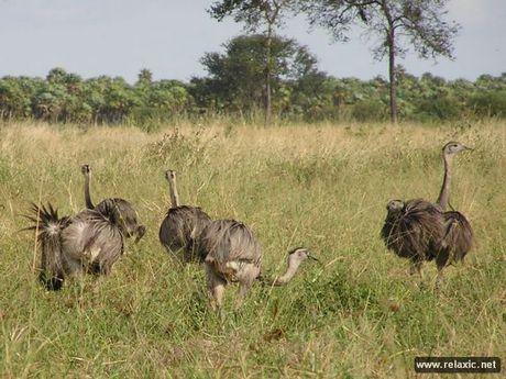 Ky thu khu tu nhien hoang da Pantanal - Brazil - Anh 5